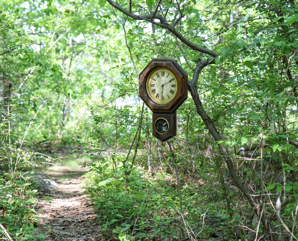 reloj en la jungla